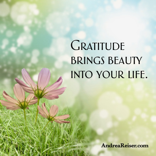 Gratitude brings beauty into your life