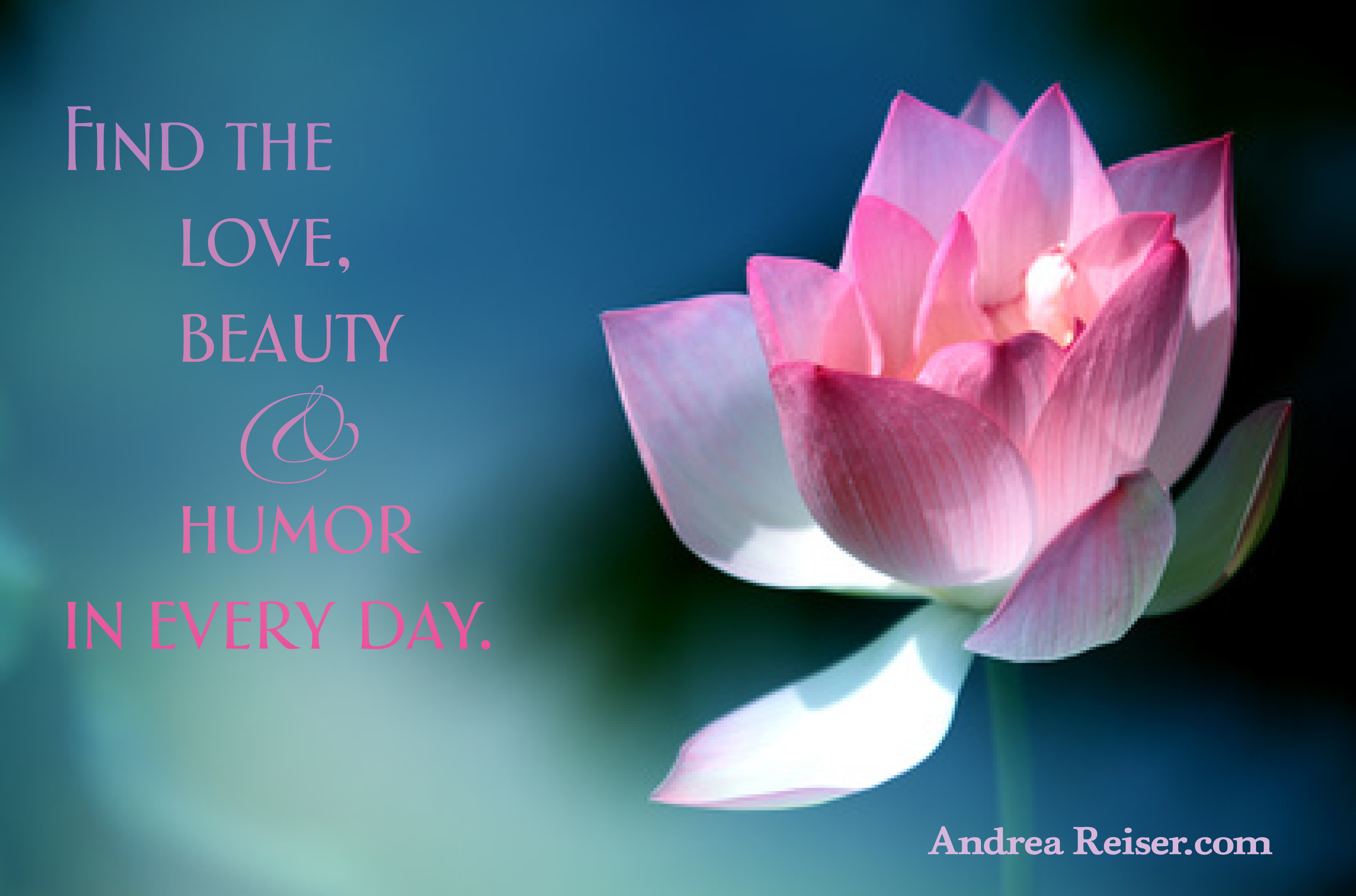 Find The Love Beauty Humor In Every Day Lotus Flower Andrea